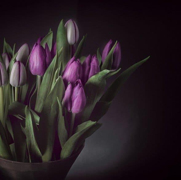 Blumen im Studio Fotografieren