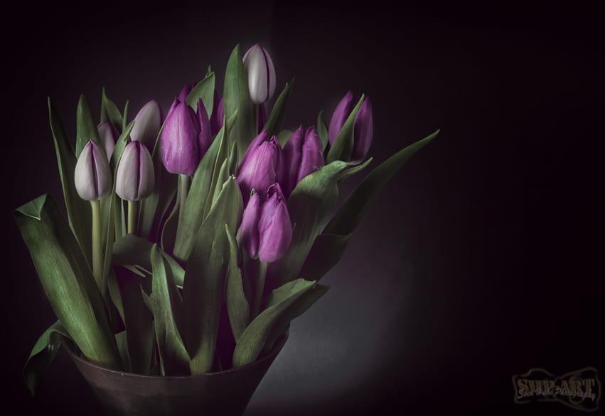 Blumen im Studio - Photoshop Bearbeitung